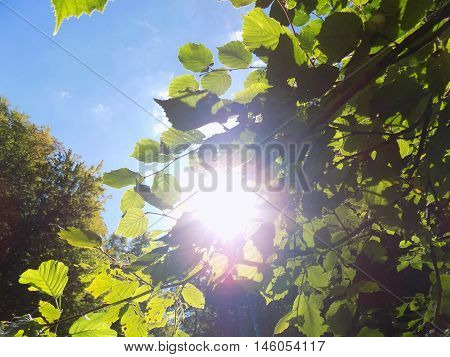 Shining sun through deciduous tree in deciduous forest in wild nature