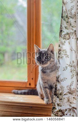 mongrel cat sitting on a window sill
