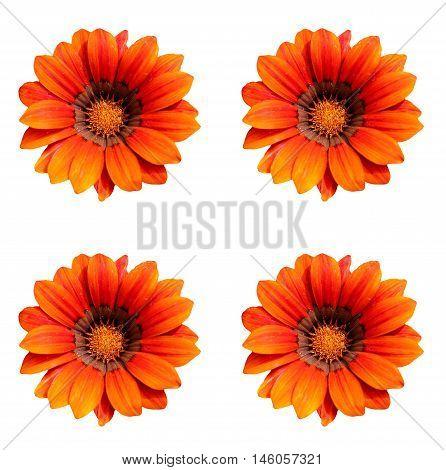 Abstract creative colourfull garden flowers scene England