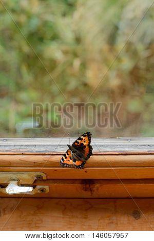 butterfly sitting on a wooden window sill
