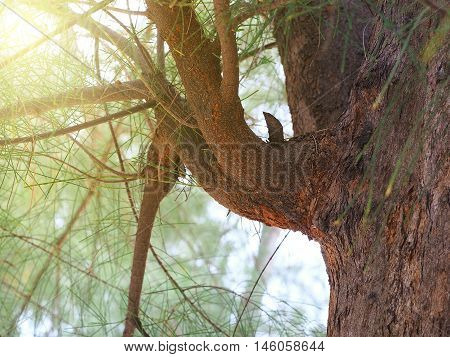 Pine tree brunch in the forest or park