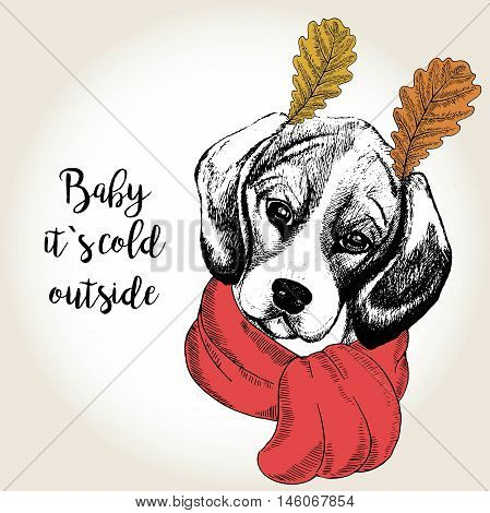 Vector close up portrait of beagle wearing the red scarf and oak leaf ears. Hand drawn domestic dog illustration. Baby its cold outside. Autumn engraved funny illustration.