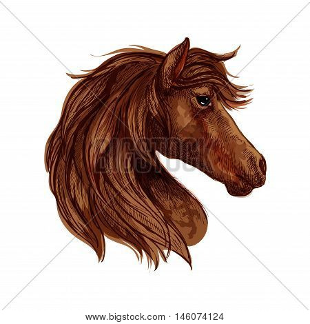 Brown horse head sketch of arabian racehorse mare with curved neck. Horse racing or equestrian sporting themes design