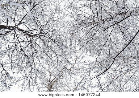 Interweaving Tree Branches