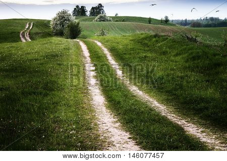 The storks fly over meadow the sides dirt winding road. Masuria Poland.