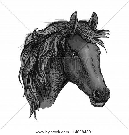 Sketch of black horse head with arabian racehorse mare. Use as equestrian sport club, horse racing or t-shirt print design