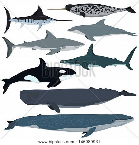 Vector set of cartoon sea animals. White shark bottlenose dolphin narwhal hammerhead shark blue whale sperm whale swordfish killer whale.