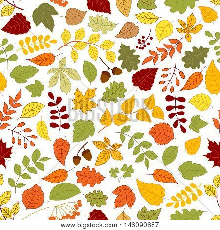 Autumn fallen leaves, branches of atumnal trees, acorns, rowanberry fruits and seeds of wild herbs seamless pattern on white background