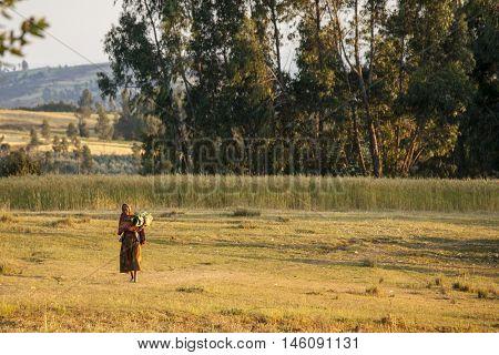 OROMIA, ETHIOPIA-NOVEMBER 6, 2014: Unidentified Ethiopian woman carries banana leaves through a field.