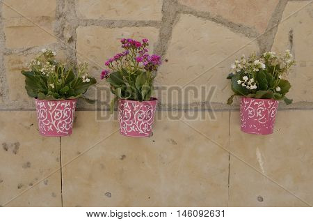 Pink pots on stone wall of a building of the city of Salamanca Spain.