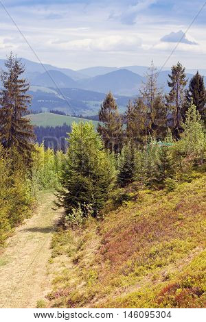 landscape consisting of footpath among fir-trees on the foreground and Carpathians mountains and blue sky with white clouds on the background