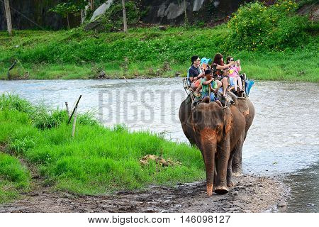 CHIANG MAI,THAILAND - November 13, 2015:Elephants and mahouts, while escorting tourists riding elephants along the river in  Mae Wang, Chiang Mai.