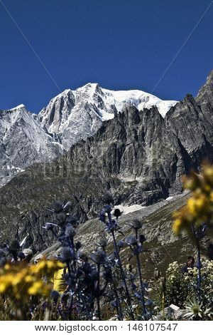 Mont Blanc summer view with colorful flowers in the foreground.