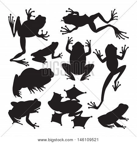 Frog cartoon tropical animal and green frog cartoon nature icons. Funny frog cartoon collection vector illustration. Black, wood, toxic frogs flat syle isolated on white background