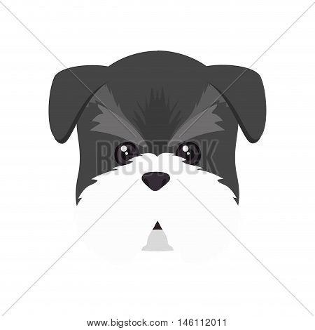 schnauzer dog breed canine pet animal. puppy cartoon. vector illustration