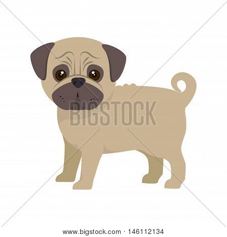 pug breed dog canine pet animal. puppy cartoon. vector illustration