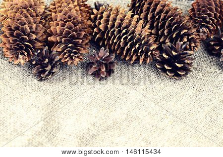 Pine And Spruce Cones On Sackcloth. Located On The Top In The Frame