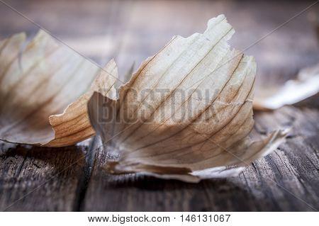Onion peel on wood. A close up of an onion peel on wood.