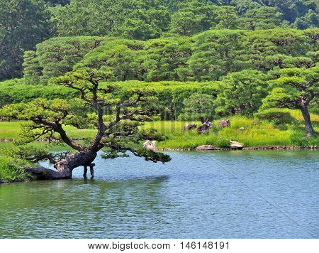 Pine tree with lake in Ritsurin Garden in Takamatsu city, Kagawa Prefecture, Japan. Ritsurin Garden is one of the most famous historical gardens in Japan.