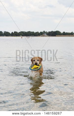 Dog playing and swimming in nature water