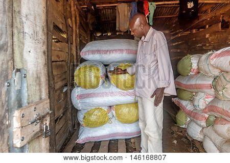 Bukoba,Tanzania- March 28, 2016: Fisherman packing dryed regional fish from Lake Victoria into sacks in Bukoba Tanzania