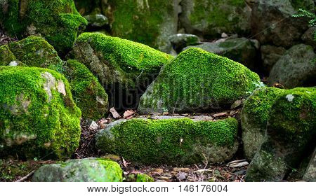 Mossy Stones Deep in The Woods South Korea