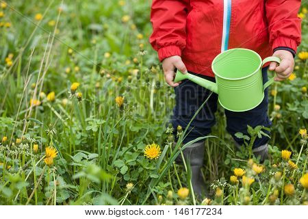Top view on a little toddler in red jacket standing on the green grass and going to water dandelions from his toy watering can. Child helping in the garden. Boy with watering can in the park.
