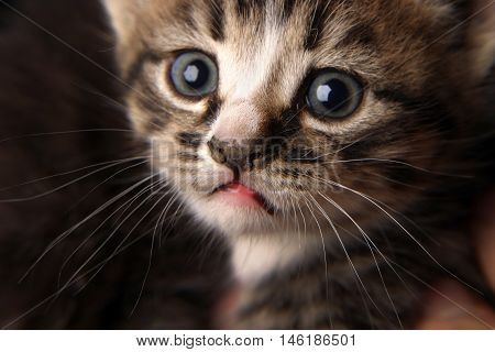 small but very beautiful cute and clever kitten