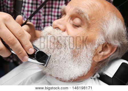 Elderly bearded man at barbershop