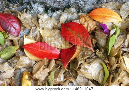 Bright red and yellow autumn leaves under the tree