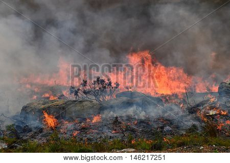 A wildfire rips through dry fynbos on the Cape Peninsula in South Africa
