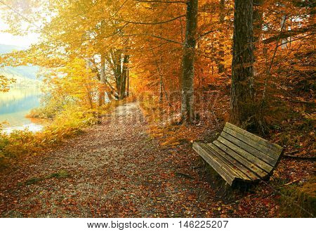 Old bench in autumn park