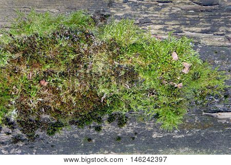 Moss grows heavily on the bark of this tree and creates an appealing texture