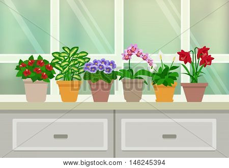 Houseplants and flowers in blossom background with window and drawers flat vector illustration