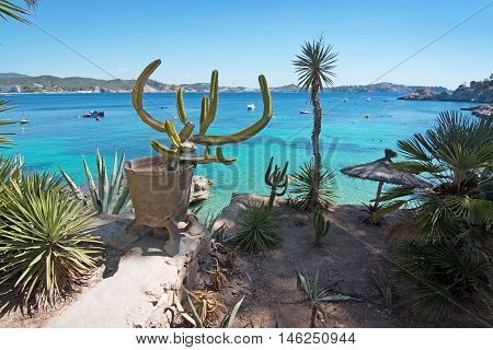 Cactus Garden And Green Water