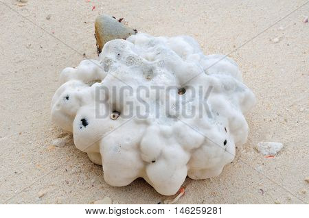 A large piece of white coral that has washed up on the white sandy beach of Bamboo island in Thailand.