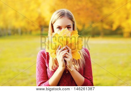 Portrait Beautiful Smiling Woman Hides Her Face Yellow Maple Leafs In Sunny Autumn Day