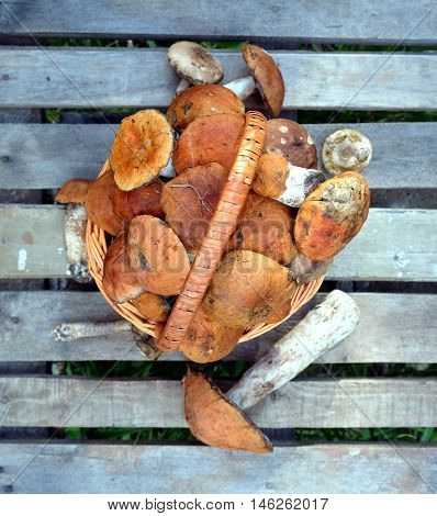 Still life with many edible mushrooms in brown wicker basket on wooden table closeup wooden table. Top view outdoors vertical close-up