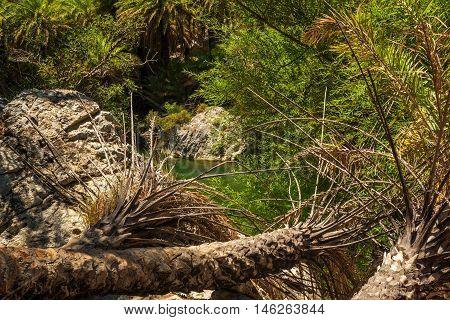 Crete, Greece: forest in Palm Bay, famous touristic destination