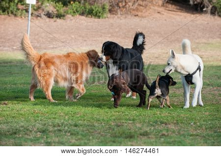 Group of dogs at park smelling each other