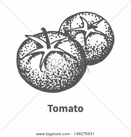 Vector illustration doodle black and white hand-drawn tomato. Isolated on white background. The concept of harvesting. Vintage style.