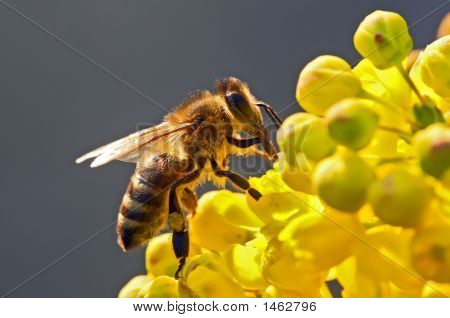 The Bee In Flower
