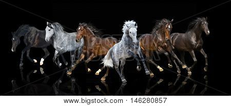 isolate of six galloping forward horses on the black background
