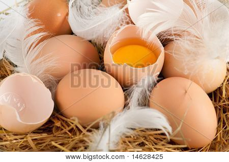Eggs And Feathers At Hay