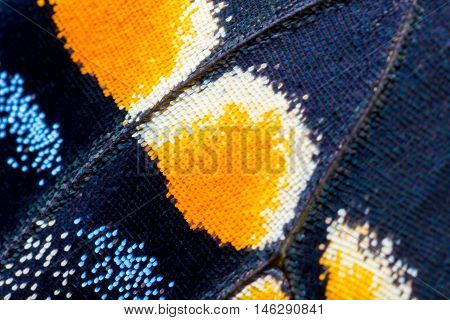 Swallowtail butterfly wing at 5x life size. A super macro photo, great for abstract backgrounds.