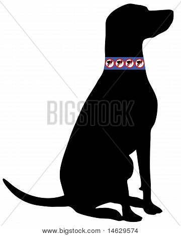 Dog With Flea Collar