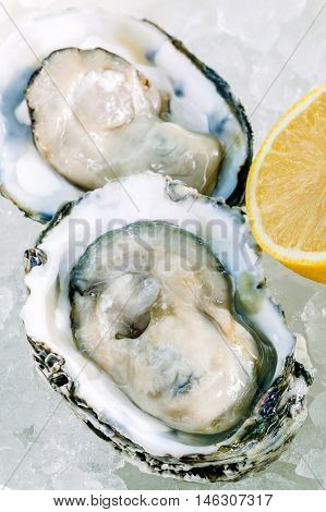 Fresh Oysters With Lemon On Ice Background. Opened Fresh Oysters For  Appetizer With Selective Focus