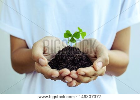 The Girl Hold  Clover Leaf . - Concept For Love , Hope And Goodness.the Girl 's Hands Holding Clover