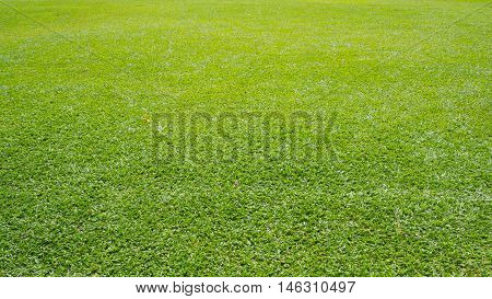 Real fresh green grass field background wide