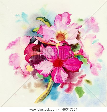 watercolor original painting Realistic flower pink color of Impala Lily flower and green leaves in blue background.